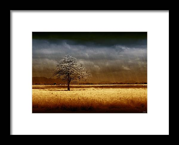 Landscapes Framed Print featuring the photograph And The Rains Came by Holly Kempe