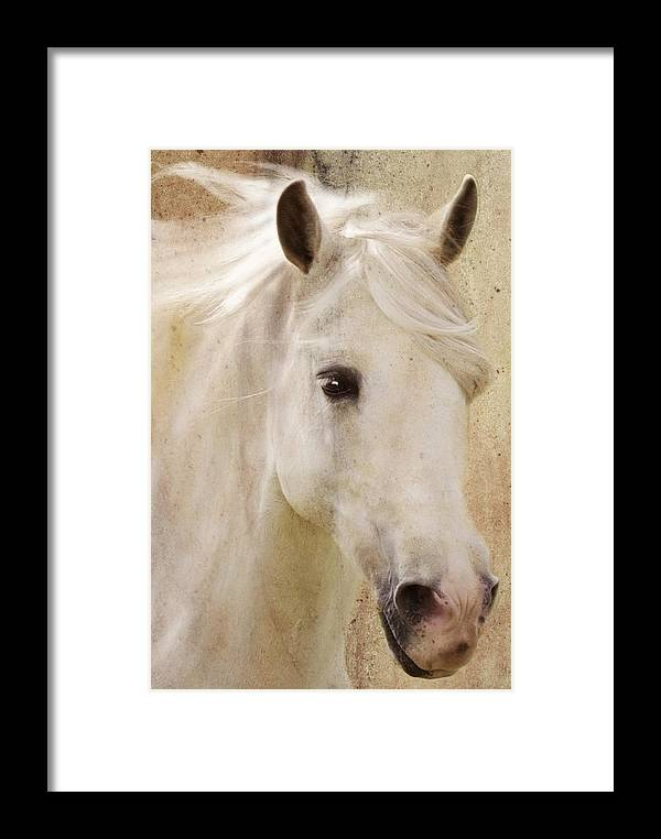 White Stallion Framed Print featuring the photograph Andalusian Dreamer by Melinda Hughes-Berland