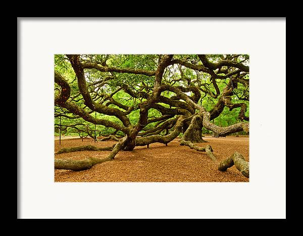 Nature Framed Print featuring the photograph Angel Oak Tree Branches by Louis Dallara