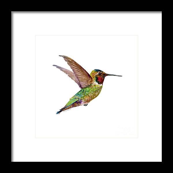 Bird Framed Print featuring the painting Anna Hummingbird by Amy Kirkpatrick