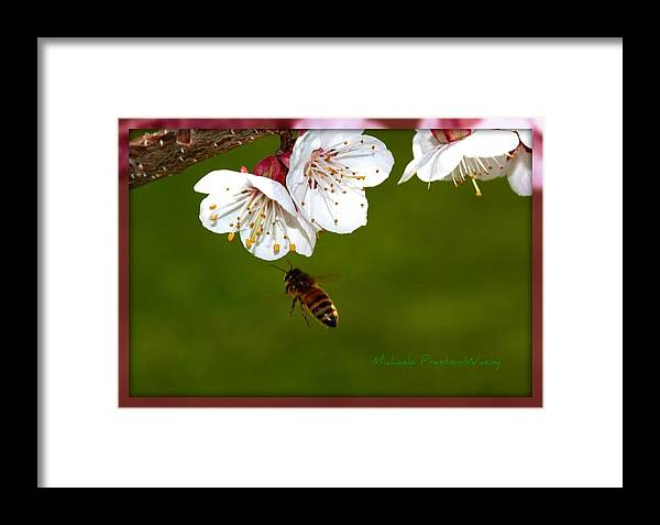 Macro Framed Print featuring the photograph Approaching by Michaela Preston