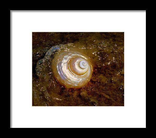 Seashells Framed Print featuring the photograph Apricot Oceans by Karen Wiles