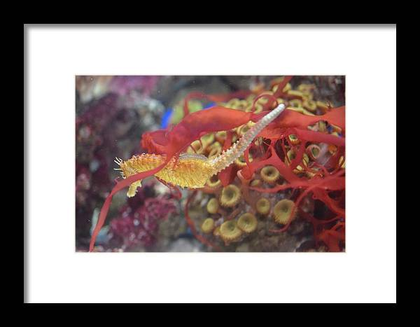 Sea Horse Framed Print featuring the photograph Aquarium Fun by Chandra Wesson