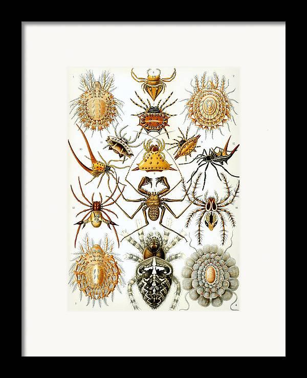 Arachnida Framed Print featuring the digital art Arachnida by Georgia Fowler