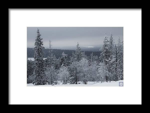 Framed Print featuring the photograph Arctic Treeline by Anatole Beams