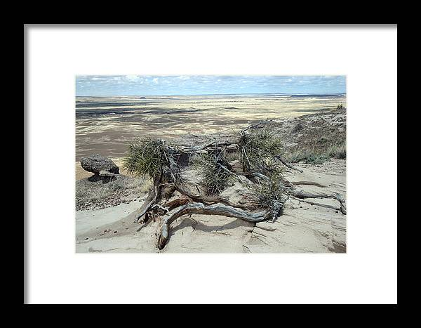 Twisted Tree Framed Print featuring the photograph Arizona Badlands by Susan Woodward