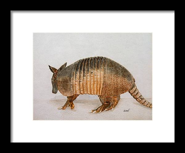 Armadillo Framed Print featuring the drawing Armadillo by Zina Stromberg