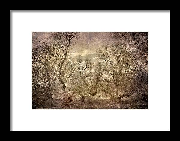 Landscapes Framed Print featuring the photograph Arms Ghost Forest by Guido Montanes Castillo