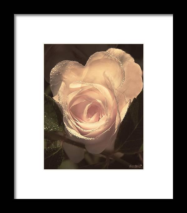 Fleurogeny Art Framed Print featuring the digital art Arrosa by Torie Tiffany