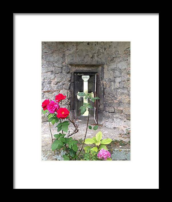Photograph Framed Print featuring the photograph Arrowslit Rose by Nicole Parks