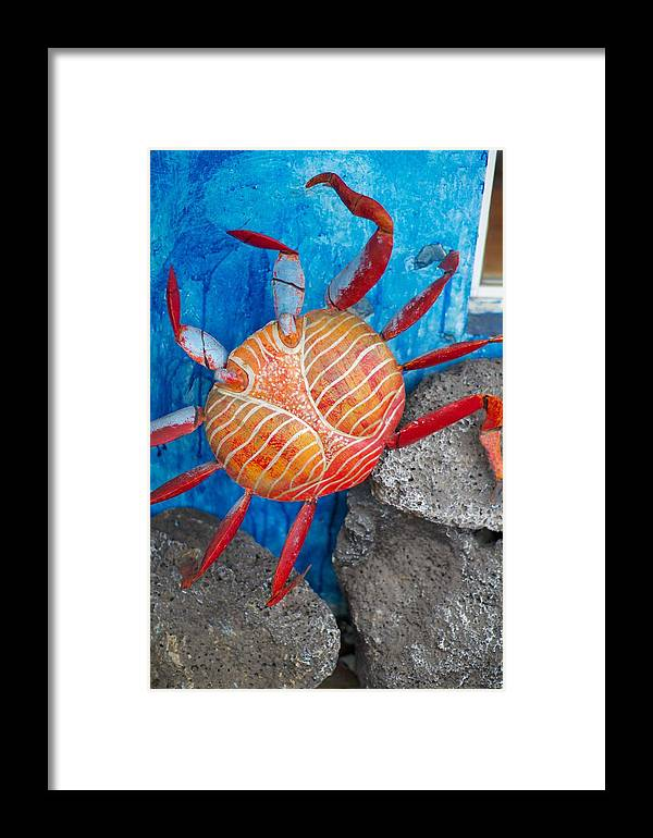 Galapagos Framed Print featuring the photograph Art Follows Life by Allan Morrison