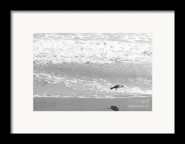 Beach Framed Print featuring the photograph As The Crow Flies by Artist and Photographer Laura Wrede