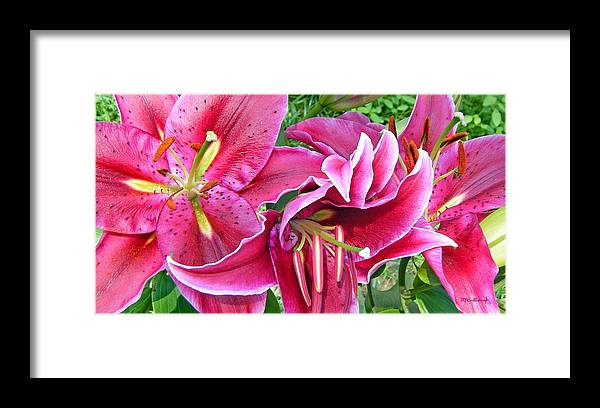 Duane Mccullough Framed Print featuring the photograph Asian Lily Flowers by Duane McCullough