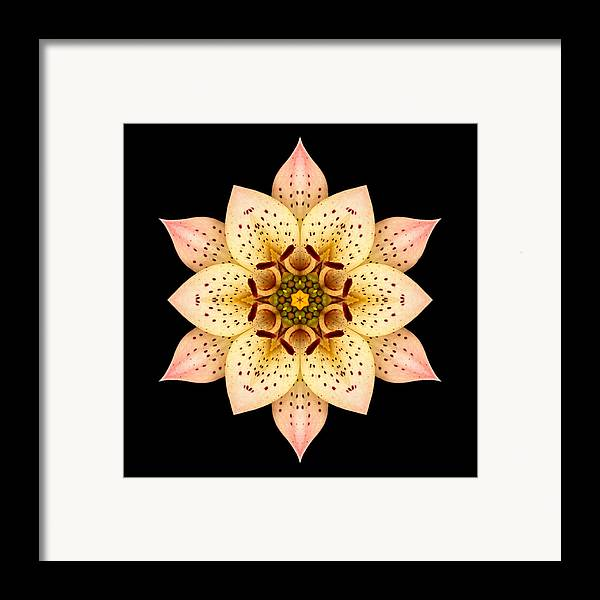 Flower Framed Print featuring the photograph Asiatic Lily Flower Mandala by David J Bookbinder
