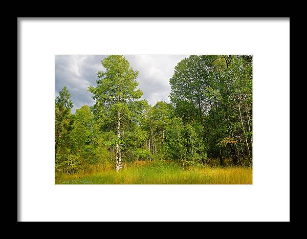 Aspen Framed Print featuring the photograph Aspen And Others by Jim Thompson