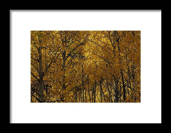 Aspen Framed Print featuring the photograph Aspen Glow Horizontal by Julie Grandfield
