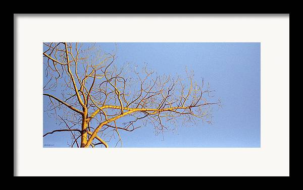 Aspen Painting Framed Print featuring the painting Aspen In The Autumn Sun by Elaine Booth-Kallweit