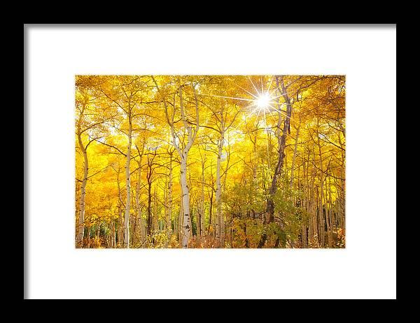 Aspens Framed Print featuring the photograph Aspen Morning by Darren White