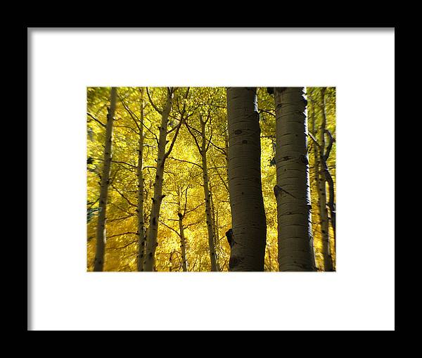 Coconino National Forest Framed Print featuring the photograph Aspen Of Arizona by Jeri lyn Chevalier
