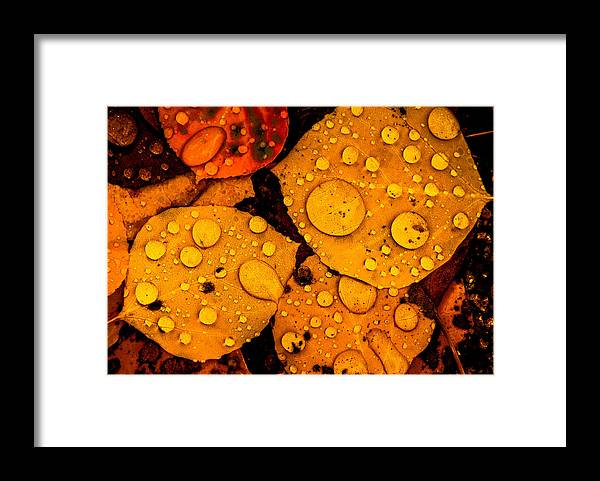 Aspens Framed Print featuring the photograph Aspens 3 2014 by Jim Painter