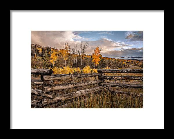 Aspens Framed Print featuring the photograph Aspens 5 2014 by Jim Painter