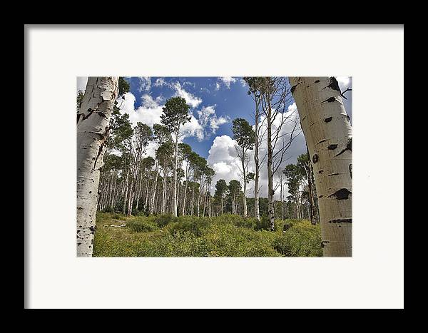 3scape Framed Print featuring the photograph Aspen Grove by Adam Romanowicz