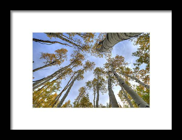 Autumn Framed Print featuring the photograph Aspens And Sky by Shawn Kassner