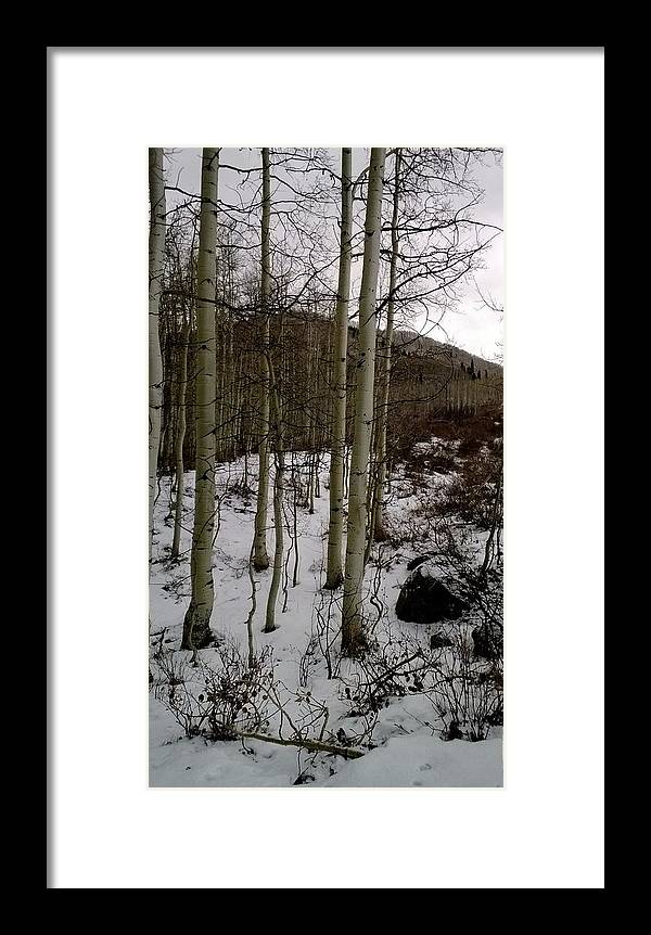 Landscape Framed Print featuring the photograph Aspens by Larissa Bloom