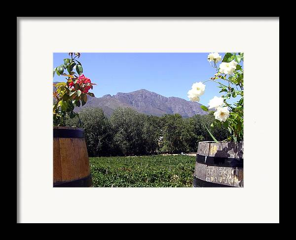 Vineyard Framed Print featuring the photograph At The Rickety Bridge Winery by Barbie Corbett-Newmin