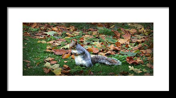 Squirrel Framed Print featuring the digital art Attentive Squirrel by Gina Dsgn