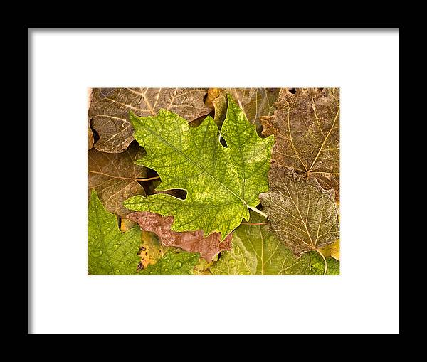 Nobody Framed Print featuring the photograph autumm is coming 3 - A carpet of autumn color leaves by Pedro Cardona Llambias