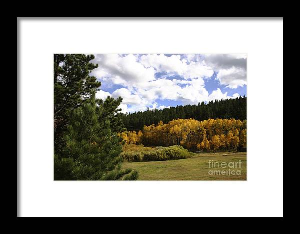 Aspens Framed Print featuring the photograph Autumn Along 285 by Susan See