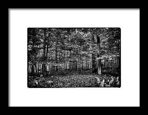 Adirondack's Framed Print featuring the photograph Autumn At Mccauley Mountain IIi by David Patterson