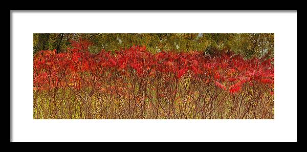 Landscape Framed Print featuring the photograph Autumn Blaze by Claudio Bacinello