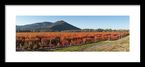 Panorama Framed Print featuring the photograph Autumn Blueberry Panorama by Mick Anderson
