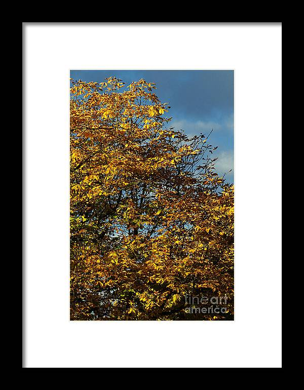 Nature Framed Print featuring the photograph Autumn Colors 5 by Rudi Prott