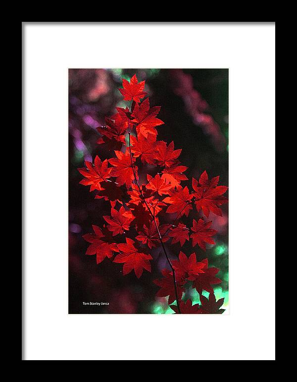 Autumn Colors Early Framed Print featuring the photograph Autumn Colors Early by Tom Janca