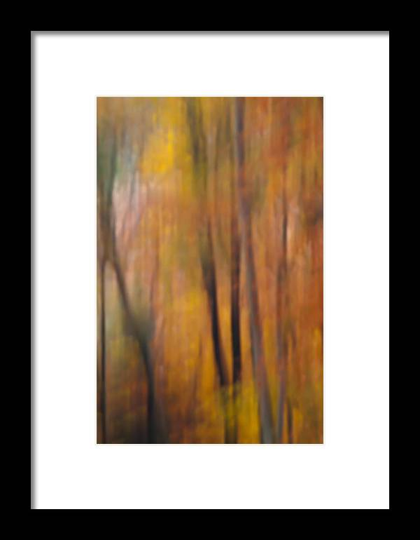 Fall Framed Print featuring the photograph Autumn Colors Iv by Daniel Csoka