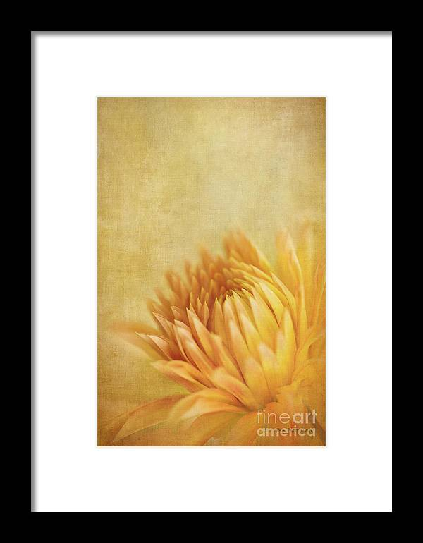 Dahlia Framed Print featuring the photograph Autumn Delight by Beve Brown-Clark Photography