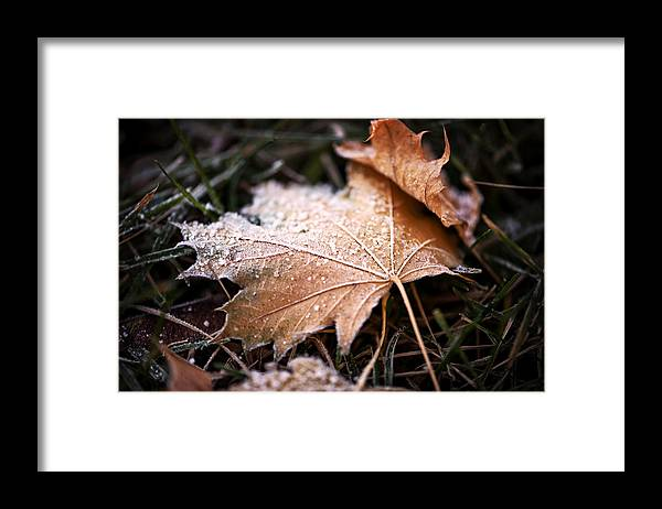 Leaves Framed Print featuring the photograph Autumn Frost by Lisa Charbonneau