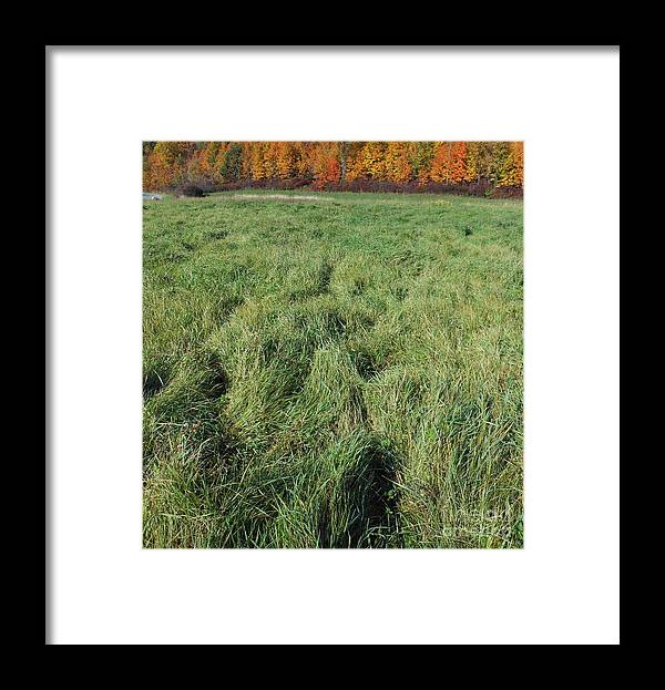 Field Framed Print featuring the photograph Autumn Grass by Beebe Barksdale-Bruner