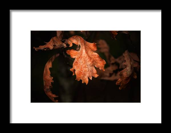 Art Framed Print featuring the photograph Autumn Is In The Air by Tom Mc Nemar