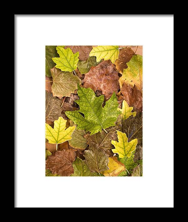 Nobody Framed Print featuring the photograph autumn is coming 5 - A carpet of autumn color leaves by Pedro Cardona Llambias