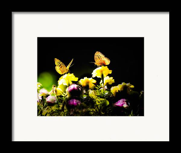 Insect Framed Print featuring the photograph Autumn Is When We First Met by Bob Orsillo