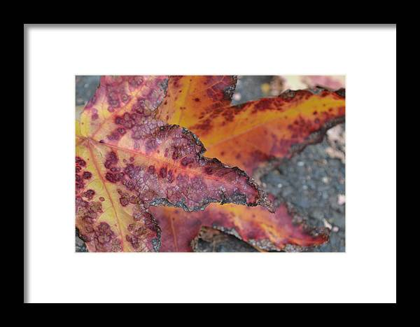 Framed Print featuring the photograph Autumn by Kianna Patterson