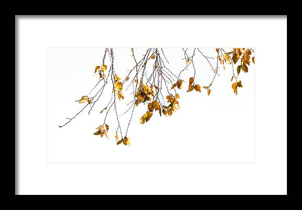 Leaf Framed Print featuring the photograph Autumn Leaves Hanging From Branch by John Henkel