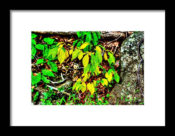 Leaves Framed Print featuring the photograph Autumn Leaves In Green And Yellow by Mother Nature