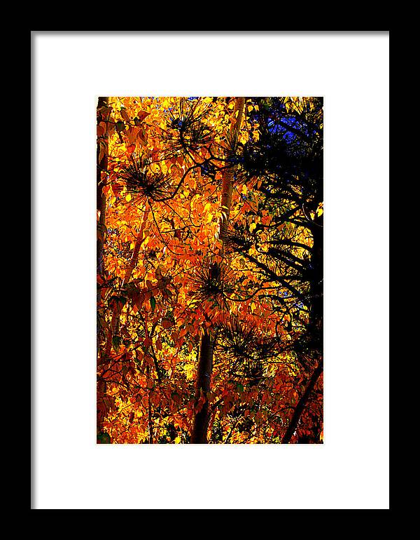 Autumn Leaves Framed Print featuring the photograph Autumn Leaves by Lynn Bawden