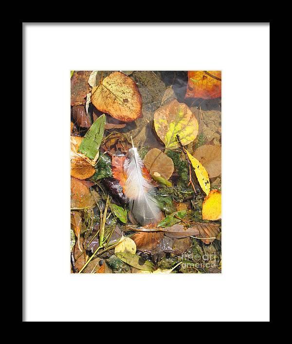 Autumn Framed Print featuring the photograph Autumn Leavings by Ann Horn