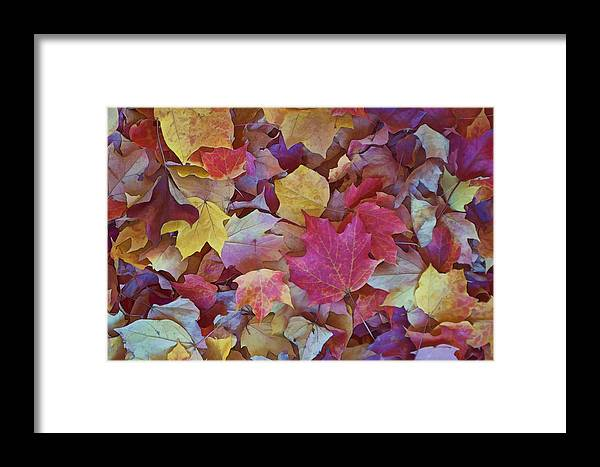 New England Framed Print featuring the photograph Autumn Maple Leaves On Forest Floor by Gregory Scott